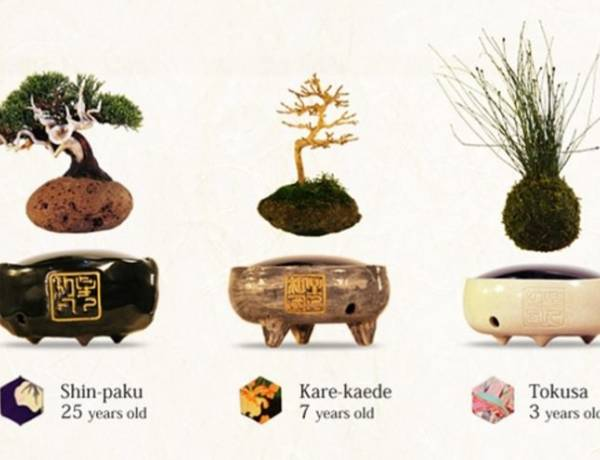 Japanese inventors have invented a Bonsai Tree called 'Air Bonsai' that will literally float in the air.