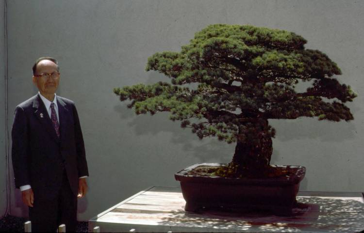 A Bonsai Tree planted in 1626, survived the atomic bomb at Hiroshima and now resides in a U.S. Museum.