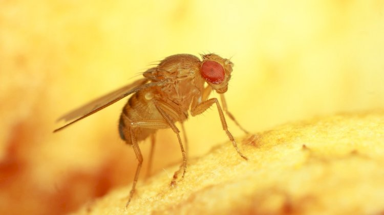 Houseflies find sugar with their feet, which are 10 million times more sensitive than human tongues.