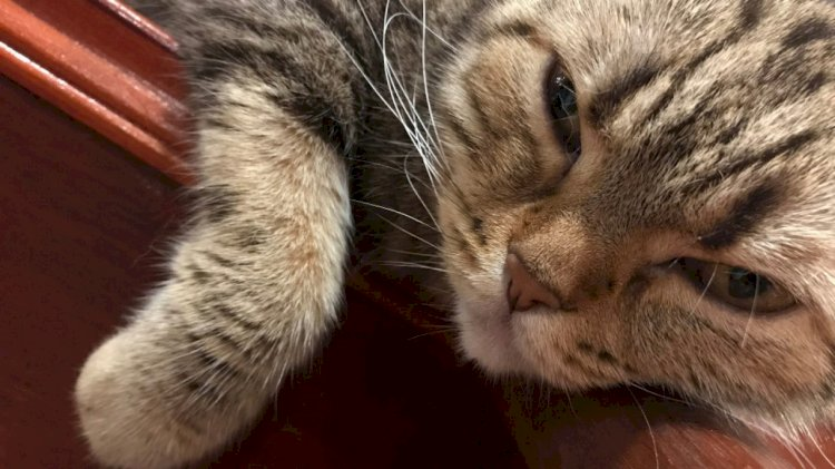 When a cat blinks slowly at you, it's a sign of affection referred to as a 'kitty kiss'.