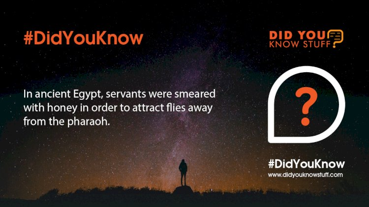 In Ancient Egypt, servants were smeared with honey in order to attract flies away from the pharaoh.