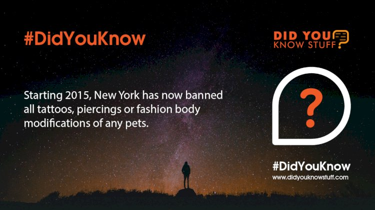 Starting 2015, New York has now banned all tattoos, piercings or fashion body modifications of any pets.