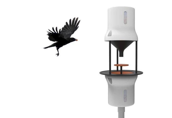 A Dutch start-up company have been able to start training wild crows so that they pick up cigarette butts and put them in bins for a peanut as a reward.