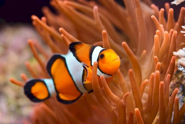 All clownfish are born male. When the female of the group dies, the most dominant male will turn female.